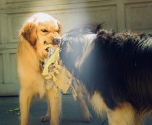 agresividad mascotas