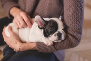 masaje para mascotas