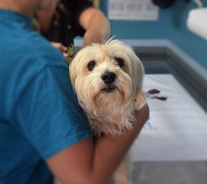 mascota veterinario