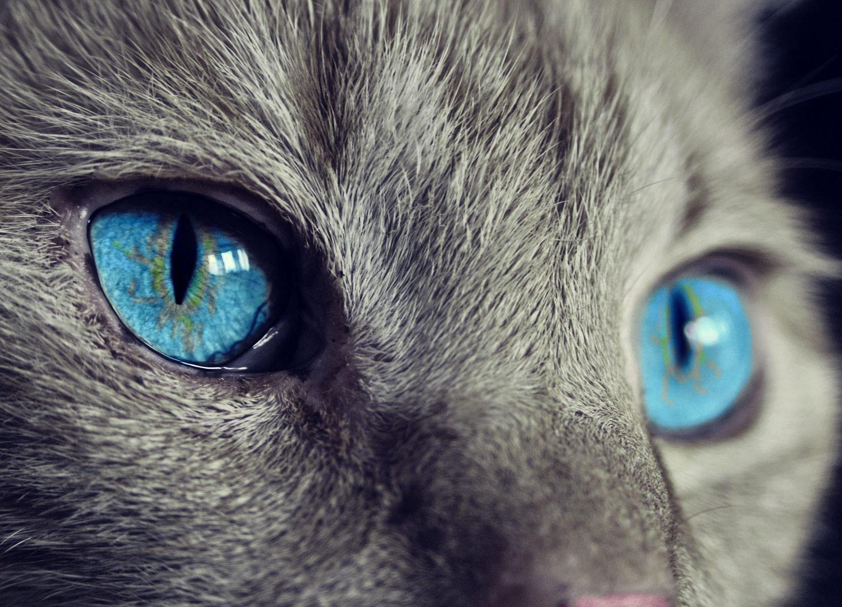 comunicación gatos